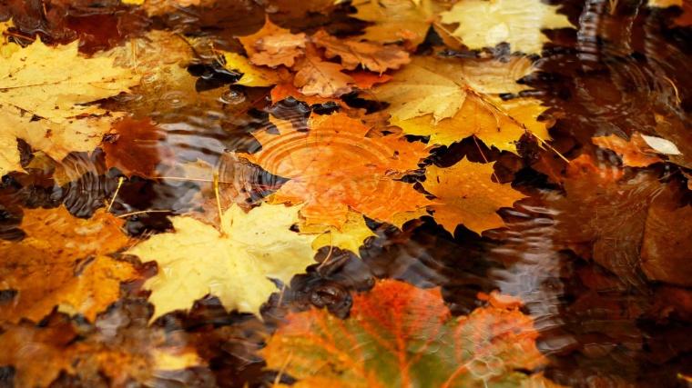 6877209-autumn-leaves.jpg